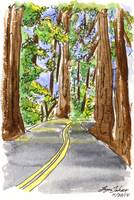 The Majestic Redwoods7 4X6