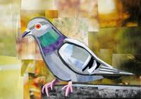 The Exotic Pigeon