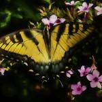 """Butterfly In The Garden Of Earthly Delights"" by SoulfulPhotos"