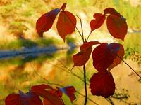 Autumn Leaves And The Changing Season