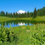 """Mount Rainier National Park - Tipsoo Lake"" by artsandi"