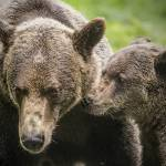 """twobears"" by SederquistPhotography"