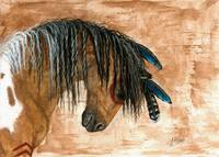 Pinto Curly Horse