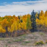"""Autumn Season Aspen Panorama Scenic View"" by lightningman"
