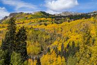 Colorado Golden Autumn Bliss