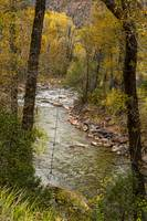 Trout Fishing Stream Crossing Swing