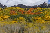 Colorado Kebler Pass Fall Beauty