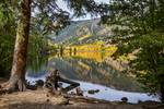"Autumn Cottonwood Lake Reflections Dreaming by James ""BO"" Insogna"