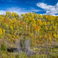 Layers of Colors of an Aspen Tree Forest Art Prints & Posters by James