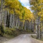 """Autumn Aspen Tree Lined Rocky Mountain Road"" by lightningman"