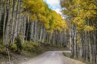 Autumn Aspen Tree Lined Rocky Mountain Road