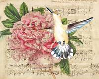 Hummingbird Song