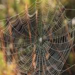 """Web in the Marsh"" by Groecar"