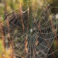 Web in the Marsh Art Prints & Posters by Carol Groenen