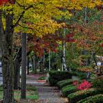 """""""The Sidewalk And Fall"""" by Kirtdtisdale"""