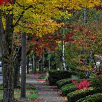 The Sidewalk And Fall Art Prints & Posters by Kirt Tisdale