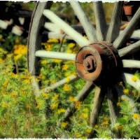 Wagon in Wild Flowers Art Prints & Posters by Michael Hodges