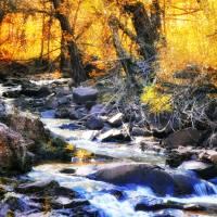 Autumn Creek by Lisa Rich