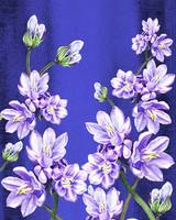 Purple Flowers Blue Blue Sky