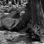 """""""Tree next to Yosemite Fall"""" by Mun_Sing"""