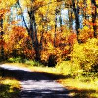 Autumn Path Art Prints & Posters by Lisa Rich