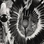 """Indigenous 2"" by davidgilbert"