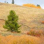 """Kenosha Pass Hillside"" by robertmeyerslussier"