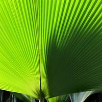 Palm Frond Square