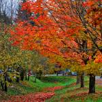 """""""Bright Orange Fall Colors"""" by Kirtdtisdale"""