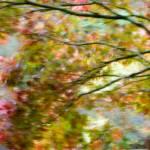 """Autumn Impressions 4"" by singularscenes"