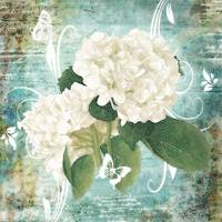 white hydrangea on blue