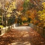 """Bridge of Color"" by zapgrafx"