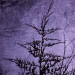"""Lavender Darkness"" by anniepics"
