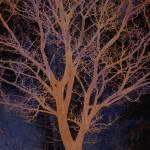 """Autumn Tree"" by CoraNiele"