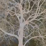 """""""Walnut Tree"""" by CoraNiele"""