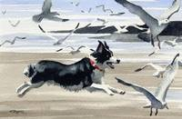 Border Collie at the Beach