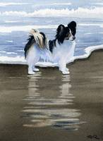 Papillon at the Beach
