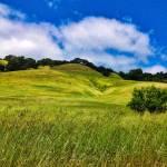 """""""Sonoma Spring"""" by djholmes"""
