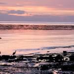 """""""Sunrise, Strait of Juan de Fuca #1"""" by SMcElwee"""