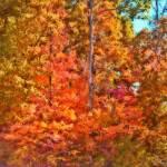 """""""Fire Forest"""" by SplitWindow"""
