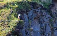Eagle on the cliff 2