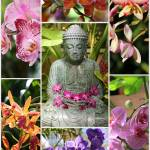 """Buddha with Orchids Collage"" by Groecar"