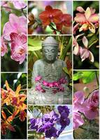 Buddha with Orchids Collage