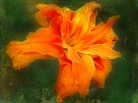 Orange You Lovely In Your Ruffles