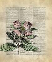 Vintage_DictionaryArt_Dogwood