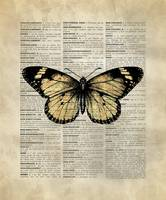 Vintage_DictionaryArt_Butterfly_1