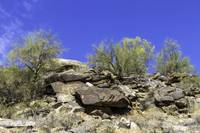 South Mountain 5-9-13 128