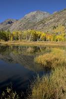 Beaver Pond and Mountains in Autumn