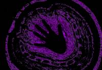 Electric Aura In Purple 3