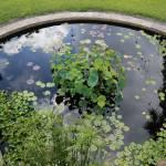 """""""Beautiful Water Garden"""" by Groecar"""